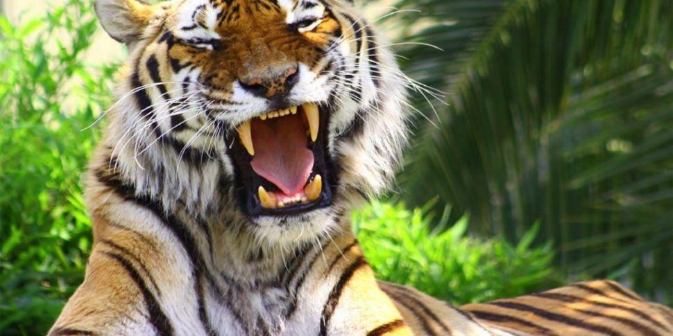 The Celtic Tiger: How We Lived