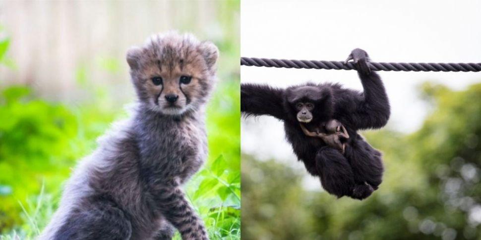 Dublin Zoo And Fota Wildlife P...