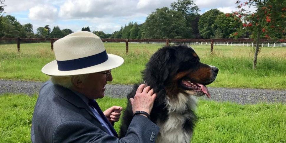President Higgins' Dog Síoda D...