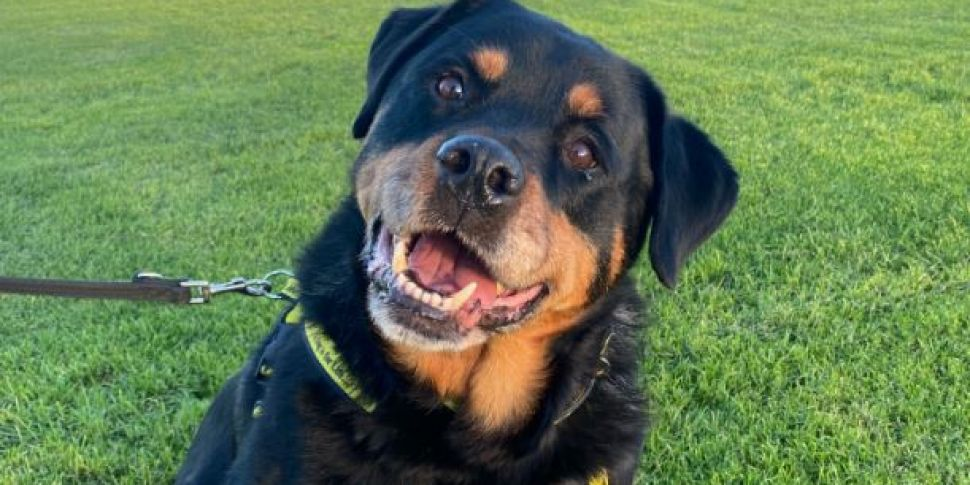 Dogs Trust Releases CCTV Of Si...