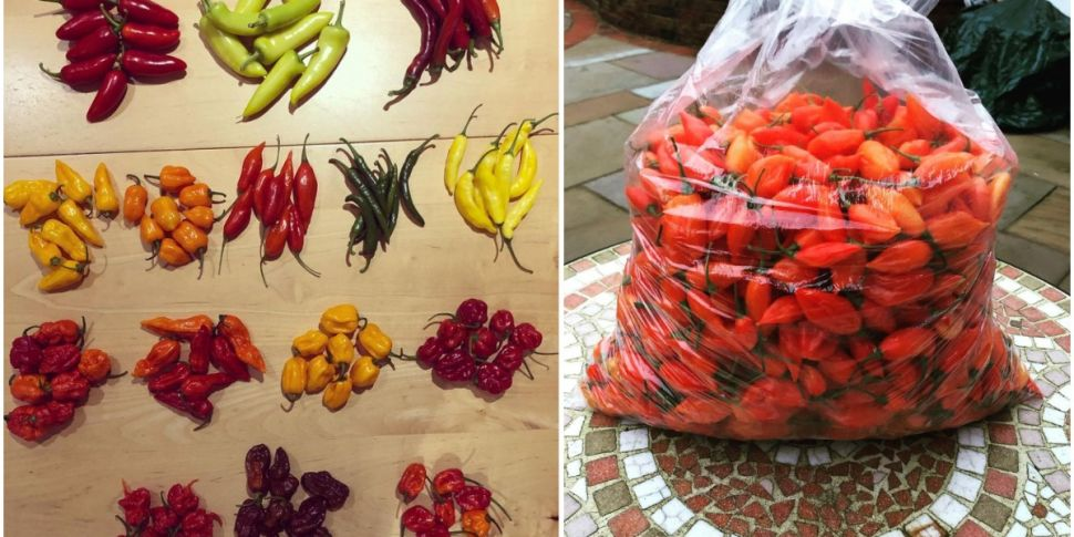 This Cork Man's Spicy Hobby Gr...