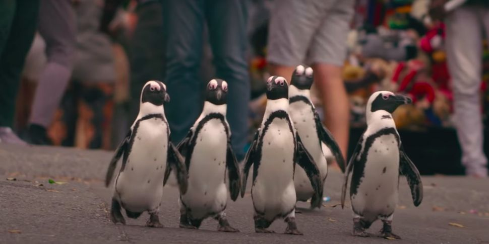 Love Island For Penguins? It's...