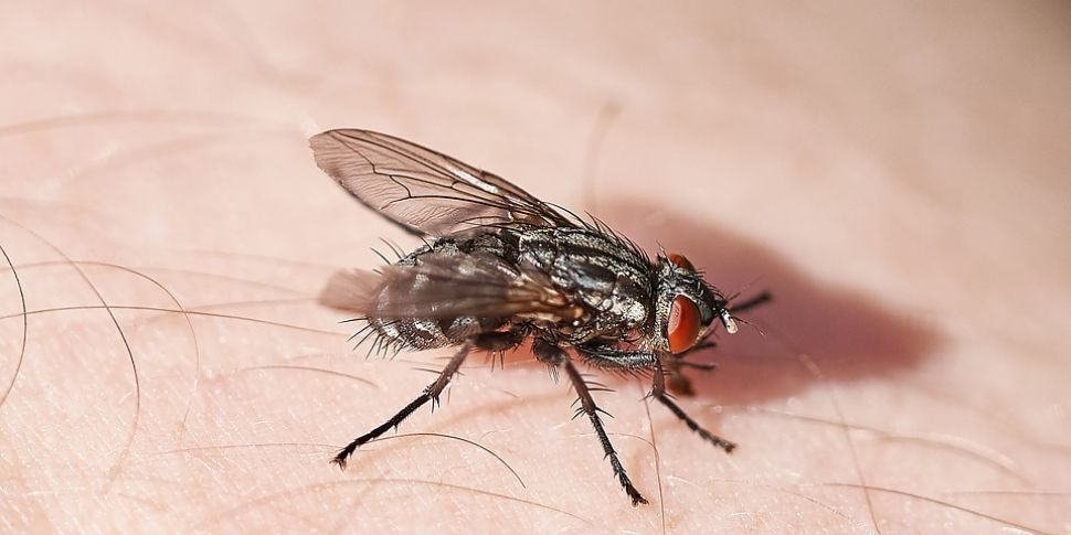 Ireland Warned To Expect A Fly...