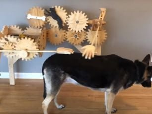 Someone Has Invented A Dog Pet...