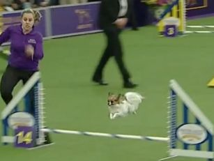We Have Found The Fastest Dog...