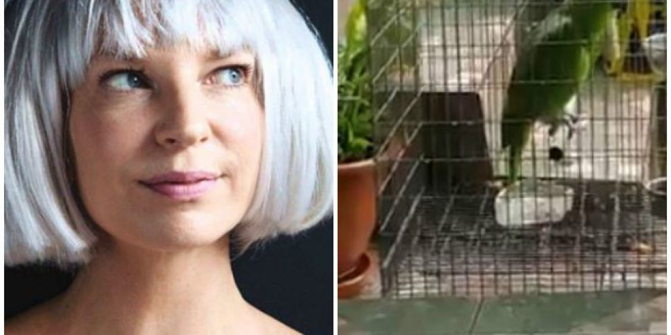 Parrot Nails Sia's 'Chandelier' Song | TodayFM