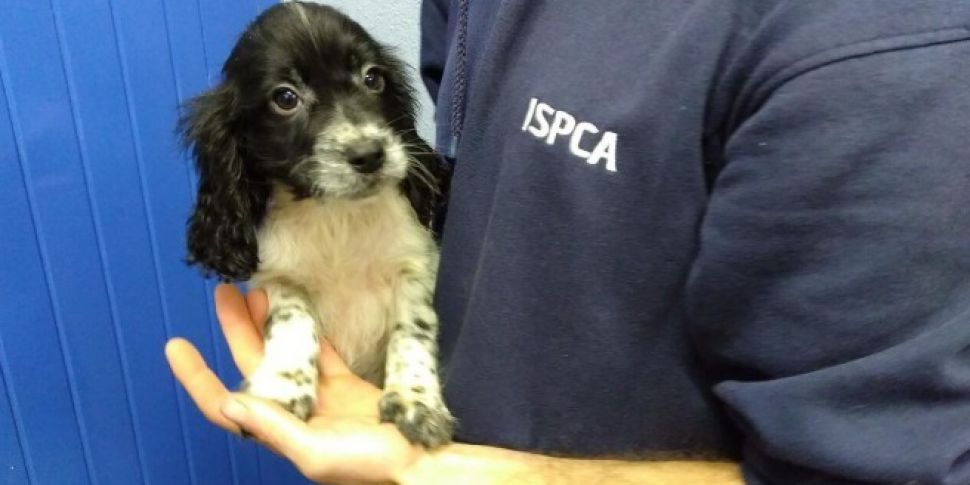 ISPCA Wants People To Create L...