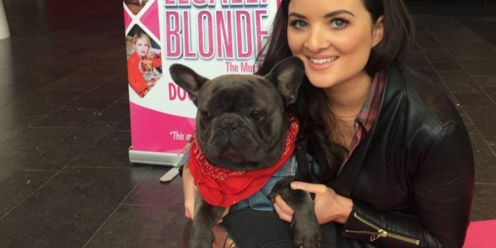 Doggie Divas Audition For Stag...