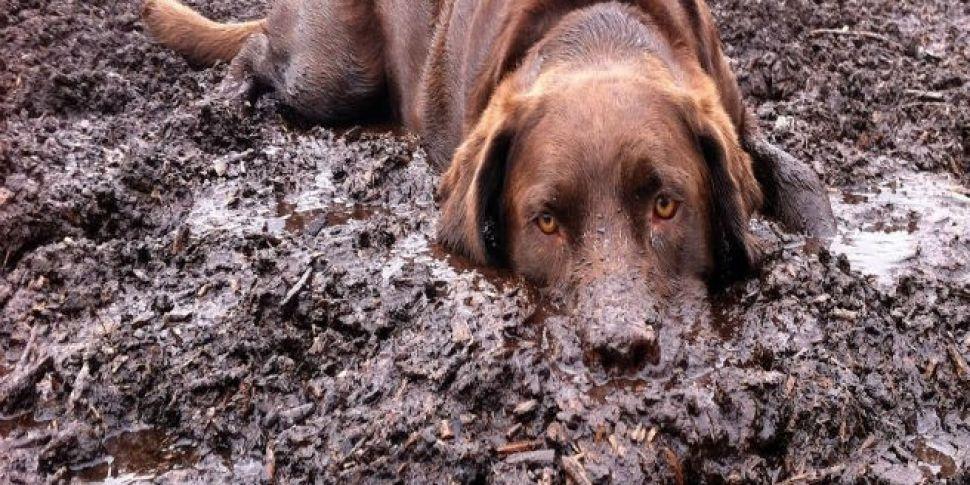 Ya Dirty Dog!