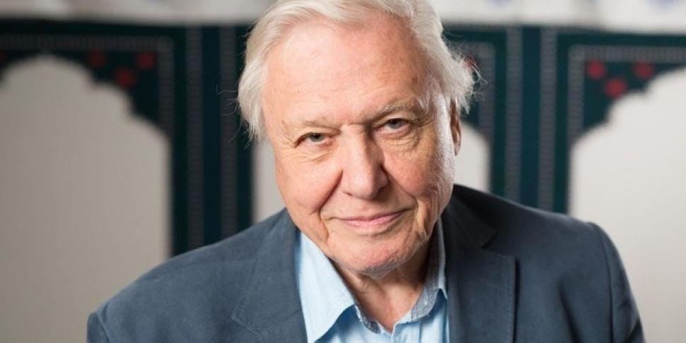 David Attenborough Says Kids A...