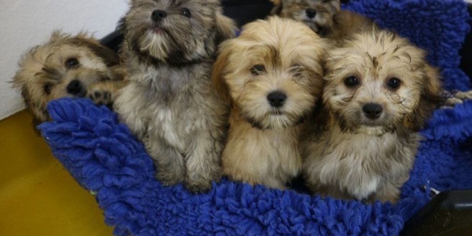 Puppies Removed From Illegal B...