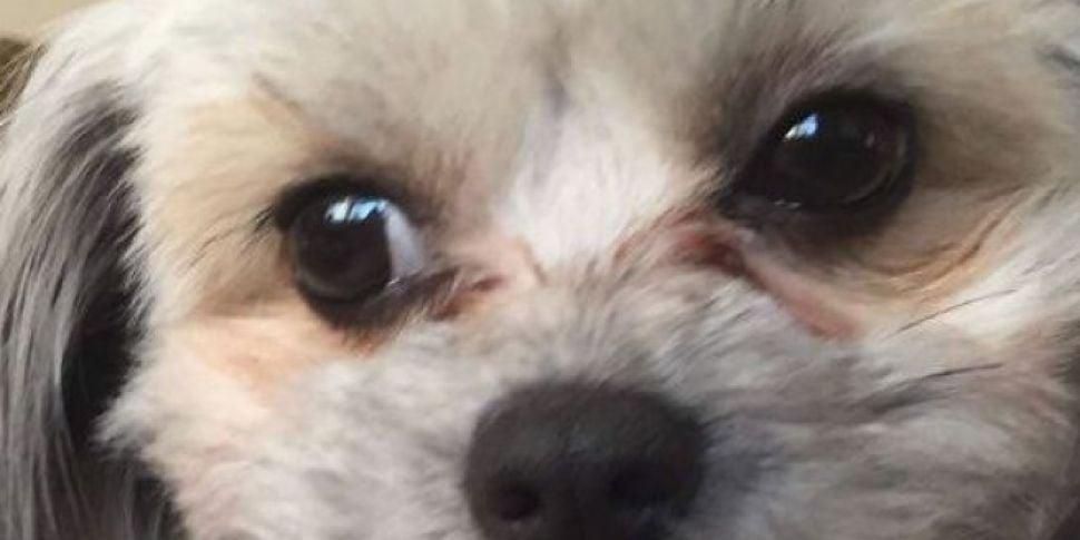 Dog Nicks False Teeth And You...