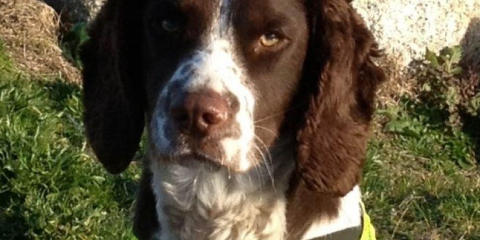 Detector Dog Helps Seize Large...
