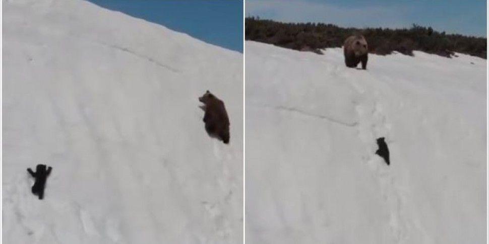 This Bear Cub Clip Is More Ten...