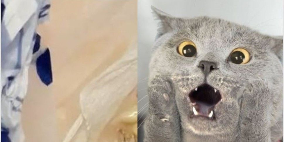 Owner Stunned By What Cat Brin...