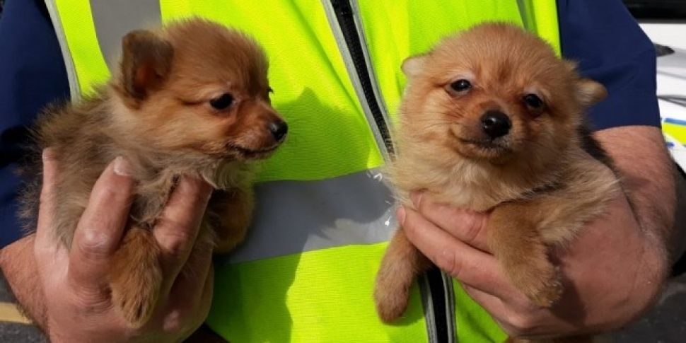 Four Puppies Rescued At Dublin...