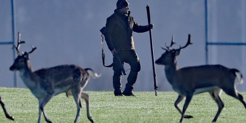 Deer Culled In Dublin's Ph...