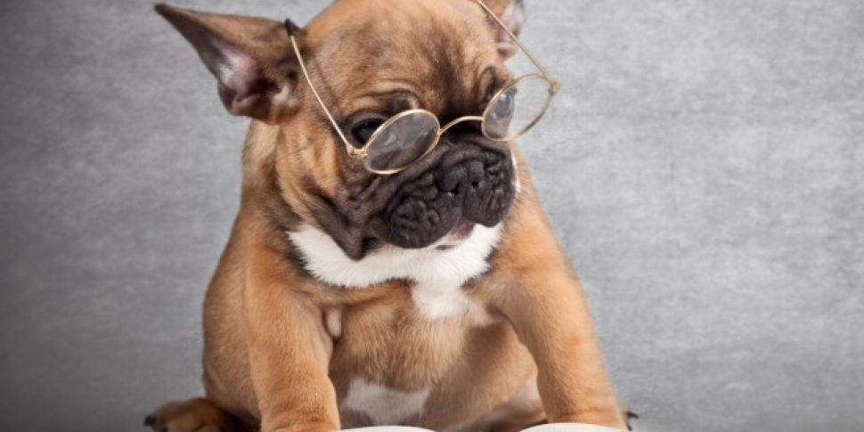 Are Dogs Actually Smarter Than...