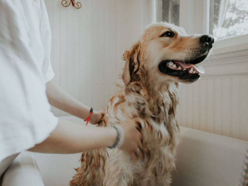 Pets are good for your health and could even save lives, a Waterford vet tells us